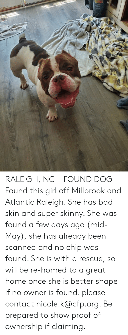 Bad, Memes, and Skinny: RALEIGH, NC-- FOUND DOG  Found this girl off Millbrook and Atlantic Raleigh. She has bad skin and super skinny. She was found a few days ago (mid-May), she has already been scanned and no chip was found. She is with a rescue, so will be re-homed to a great home once she is better shape if no owner is found. please contact nicole.k@cfp.org. Be prepared to show proof of ownership if claiming.
