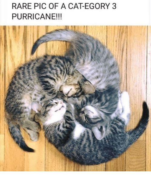 Memes, 🤖, and Cat: RARE PIC OF A CAT-EGORY 3  PURRICANE!!!