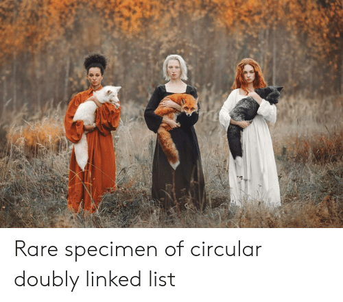 Linked: Rare specimen of circular doubly linked list