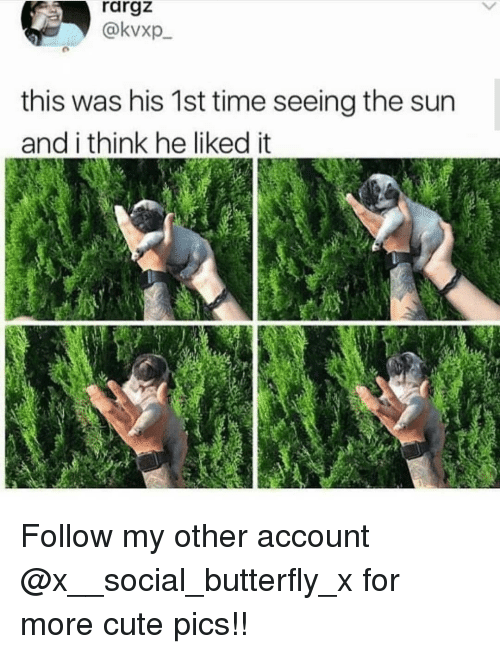Cute, Memes, and Butterfly: rargz  @kvxp  this was his 1st time seeing the sun  and i think he liked it Follow my other account @x__social_butterfly_x for more cute pics!!