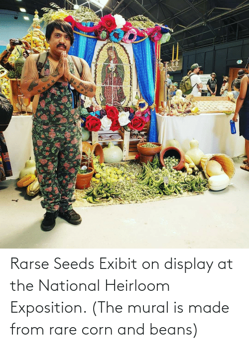 exposition: Rarse Seeds Exibit on display at the National Heirloom Exposition. (The mural is made from rare corn and beans)