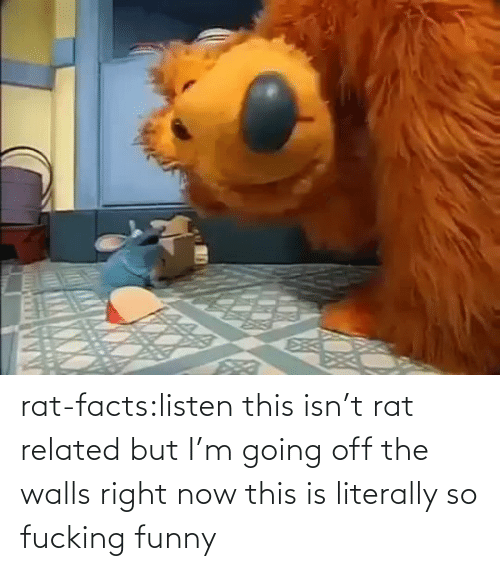Isnt: rat-facts:listen this isn't rat related but I'm going off the walls right now this is literally so fucking funny