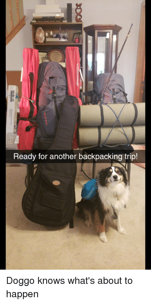 Funny, Backpacking, and Doggo: Ready for another backpacking trip! Doggo knows what's about to happen