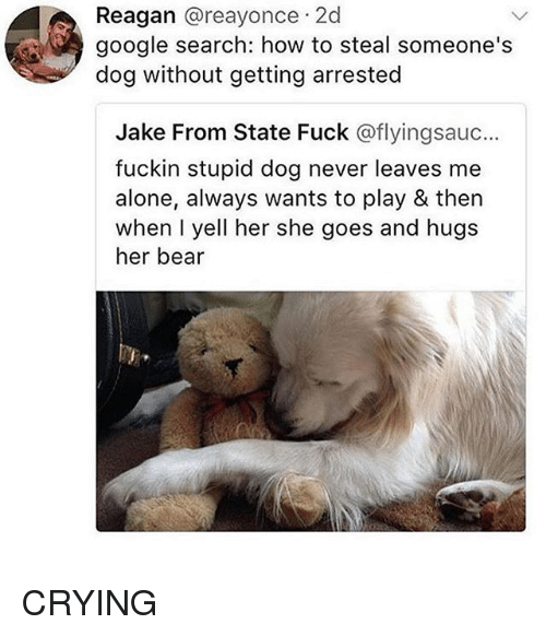 How To Steal: Reagan @reayonce 2d  google search: how to steal someone's  dog without getting arrested  Jake From State Fuck @flyingsauc...  fuckin stupid dog never leaves me  alone, always wants to play & then  when I yell her she goes and hugs  her bear CRYING