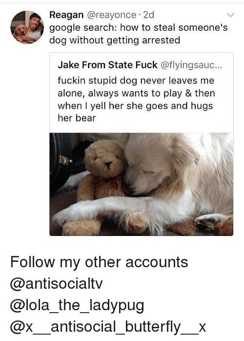 How To Steal: Reagan @reayonce 2d  google search: how to steal someone's  dog without getting arrested  Jake From State Fuck @flyingsauc..  fuckin stupid dog never leaves me  alone, always wants to play & then  when I yell her she goes and hugs  her bear Follow my other accounts @antisocialtv @lola_the_ladypug @x__antisocial_butterfly__x