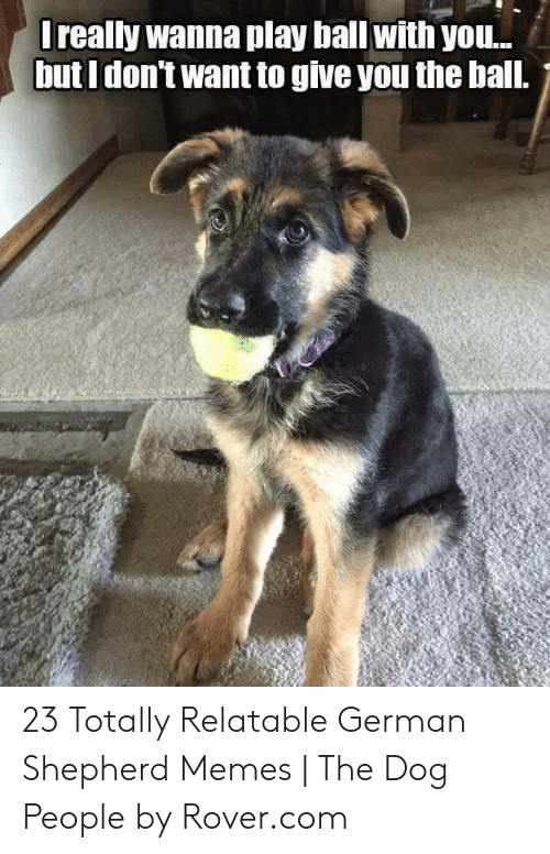 Memes, Yo, and German Shepherd: really wanna play bal witn yo..  but I don't want to give you the ball. 23 Totally Relatable German Shepherd Memes | The Dog People by Rover.com