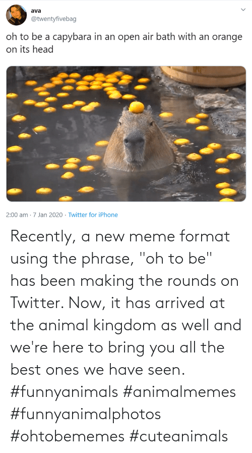 """arrived: Recently, a new meme format using the phrase, """"oh to be"""" has been making the rounds on Twitter. Now, it has arrived at the animal kingdom as well and we're here to bring you all the best ones we have seen. #funnyanimals #animalmemes #funnyanimalphotos #ohtobememes #cuteanimals"""