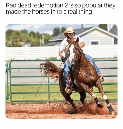 Horses, Red Dead Redemption, and Red Dead: Red dead redemption 2 is so popular they  made the horses in to a real thing
