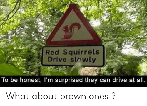 Im Surprised: Red Squirrels  Drive slowly  To be honest, I'm surprised they can drive at all What about brown ones ?