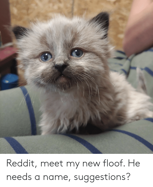 Reddit, Name, and New: Reddit, meet my new floof. He needs a name, suggestions?