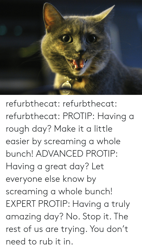Tumblr, Blog, and Http: refurbthecat: refurbthecat:  refurbthecat:  PROTIP: Having a rough day? Make it a little easier by screaming a whole bunch!  ADVANCED PROTIP: Having a great day? Let everyone else know by screaming a whole bunch!  EXPERT PROTIP:  Having a truly amazing day?  No. Stop it. The rest of us are trying. You don't need to rub it in.