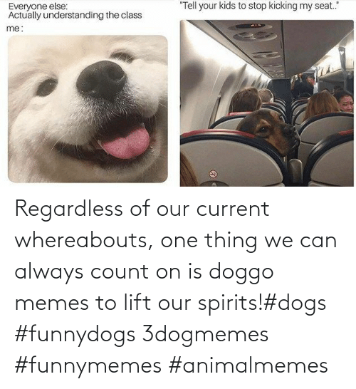 funnymemes: Regardless of our current whereabouts, one thing we can always count on is doggo memes to lift our spirits!#dogs #funnydogs 3dogmemes #funnymemes #animalmemes