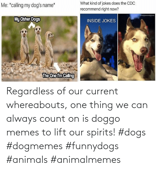 Doggo Memes: Regardless of our current whereabouts, one thing we can always count on is doggo memes to lift our spirits! #dogs #dogmemes #funnydogs #animals #animalmemes