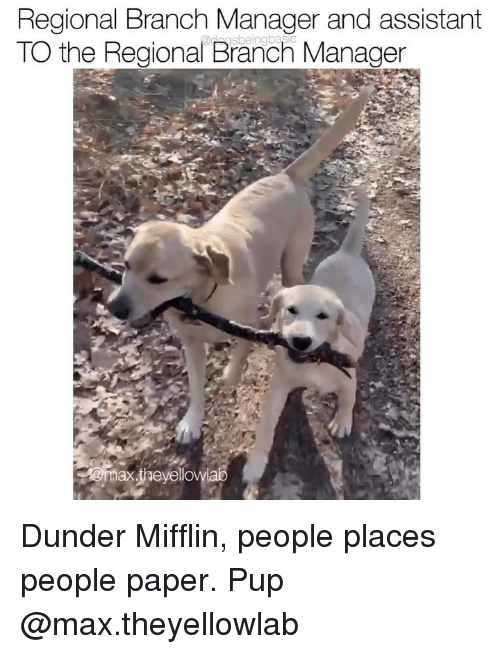 Memes, Pup, and 🤖: Regional Branch Manager and assistant  TO the Regional Branch Manager  max theyello Dunder Mifflin, people places people paper. Pup @max.theyellowlab