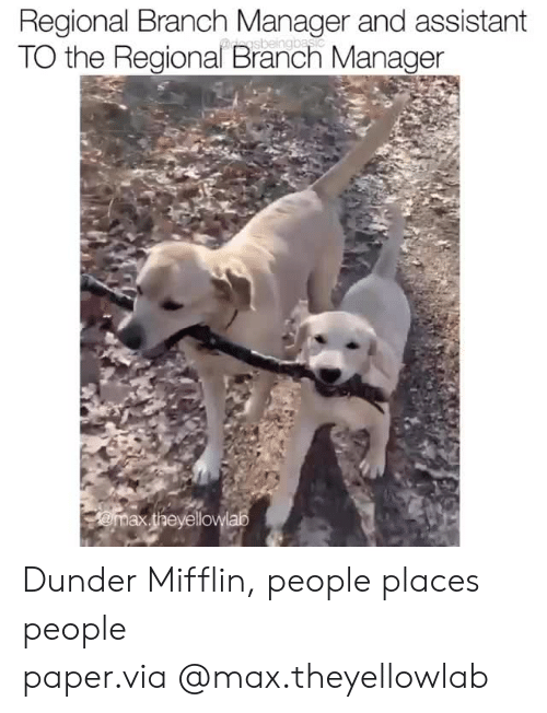 Instagram, Target, and Blank: Regional Branch Manager and assistant  TO the Regional Branch Manager Dunder Mifflin, people places people paper.via@max.theyellowlab