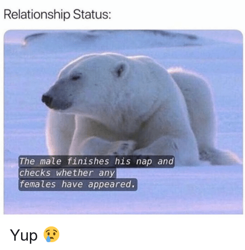 Funny, Relationship Status, and Nap: Relationship Status:  The male finishes his nap and  checks whether any  females have appeared. Yup 😢