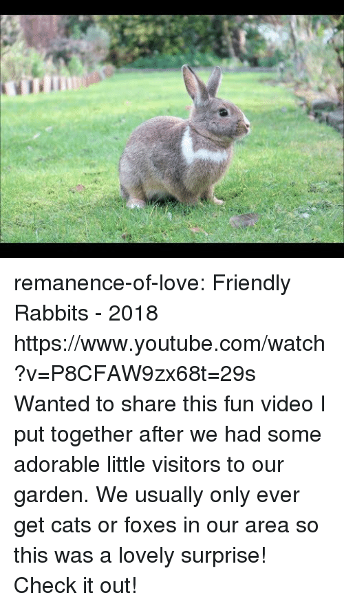 Cats, Love, and Target: remanence-of-love:  Friendly Rabbits - 2018 https://www.youtube.com/watch?v=P8CFAW9zx68t=29s  Wanted to share this fun video I put together after we had some adorable little visitors to our garden. We usually only ever get cats or foxes in our area so this was a lovely surprise! Check it out!