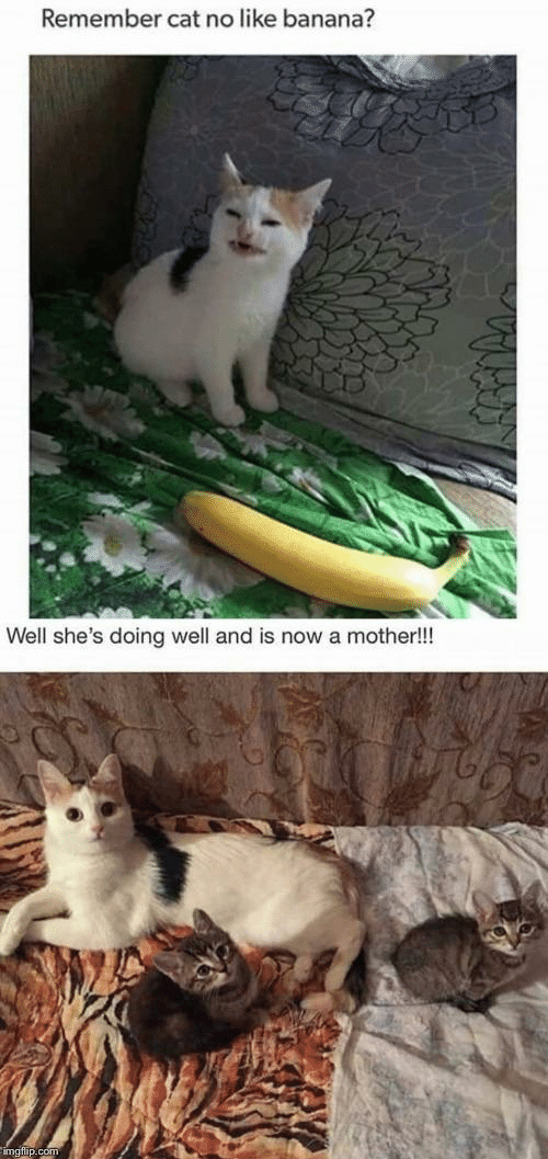 Banana, Cat, and Mother: Remember cat no like banana?  Well she's doing well and is now a mother!!!