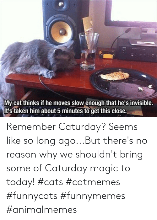 Long Ago: Remember Caturday? Seems like so long ago...But there's no reason why we shouldn't bring some of Caturday magic to today! #cats #catmemes #funnycats #funnymemes #animalmemes