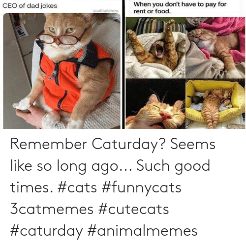 Long Ago: Remember Caturday? Seems like so long ago... Such good times. #cats #funnycats 3catmemes #cutecats #caturday #animalmemes