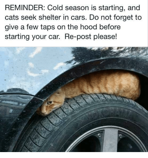 Cars, Cats, and The Hood: REMINDER: Cold season is starting, and  cats seek shelter in cars. Do not forget to  give a few taps on the hood before  starting your car. Re-post please!