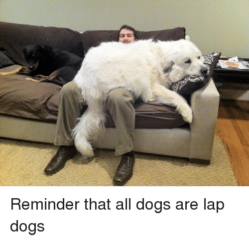 Dank, Dogs, and 🤖: Reminder that all dogs are lap dogs