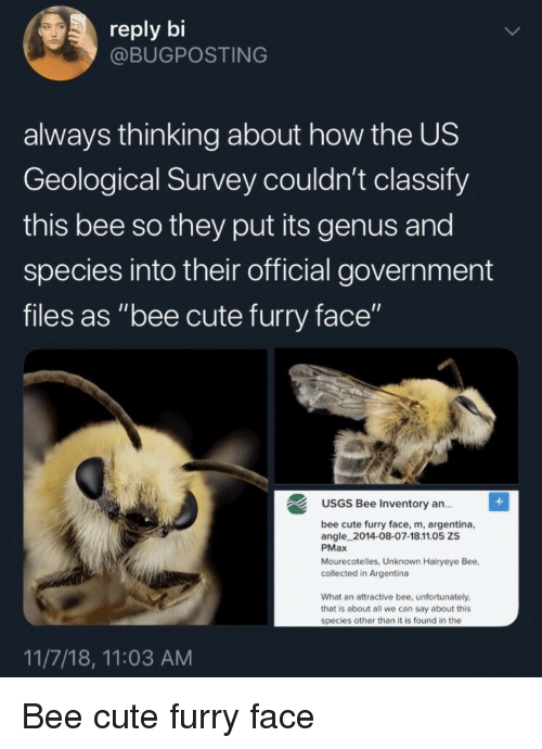 """Cute, Argentina, and Government: reply bi  @BUGPOSTING  always thinking about how the US  Geological Survey couldn't classify  this bee so they put its genus and  species into their official government  files as """"bee cute furry face""""  USGS Bee Inventory an..  ce, m, argentina,  angle 2014-08-07-18.11.05 ZS  PMax  Mourecotelles, Unknown Hairyeye Bee,  collected in Argentina  What an attractive bee, unfortunately  that is about all we can say about this  species other than it is found in the  11/7/18, 11:03 AM Bee cute furry face"""