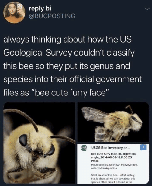 "Cute, Argentina, and Government: reply bi  @BUGPOSTING  always thinking about how the US  Geological Survey couldn't classify  this bee so they put its genus and  species into their official government  files as ""bee cute furry face""  USGS Bee Inventory an.  bee cute furry face, m, argentina,  angle 2014-08-07-18.11.05 ZS  PMax  Mourecotelles, Unknown Hairyeye Bee,  collected in Argentina  What an attractive bee, unfortunately  that is about all we can say about this  species other than it is found in the"