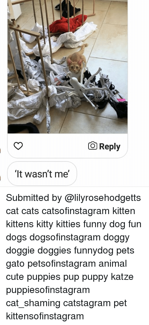 Katze: Reply  'It wasn't me' Submitted by @lilyrosehodgetts cat cats catsofinstagram kitten kittens kitty kitties funny dog fun dogs dogsofinstagram doggy doggie doggies funnydog pets gato petsofinstagram animal cute puppies pup puppy katze puppiesofinstagram cat_shaming catstagram pet kittensofinstagram