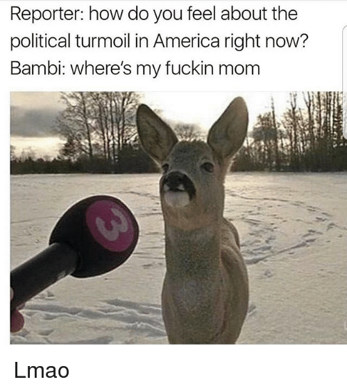 Bambi: Reporter: how do you feel about the  political turmoil in America right now?  Bambi: where's my fuckin mom Lmao