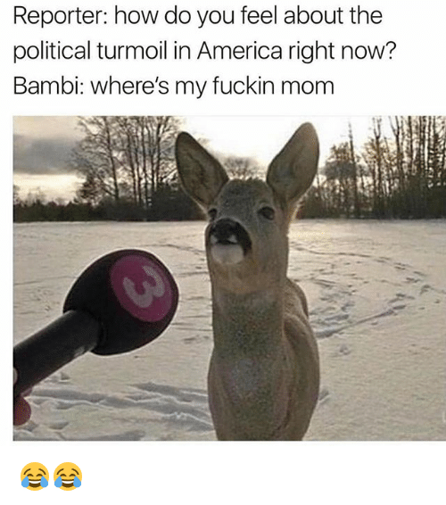 Bambi: Reporter: how do you feel about the  political turmoil in America right now?  Bambi: where's my fuckin mom 😂😂