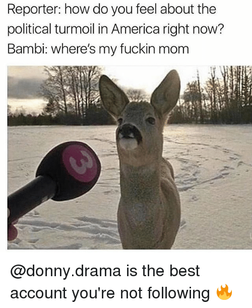 Bambi: Reporter: how do you feel about the  political turmoil in America right now?  Bambi: where's my fuckin mom @donny.drama is the best account you're not following 🔥