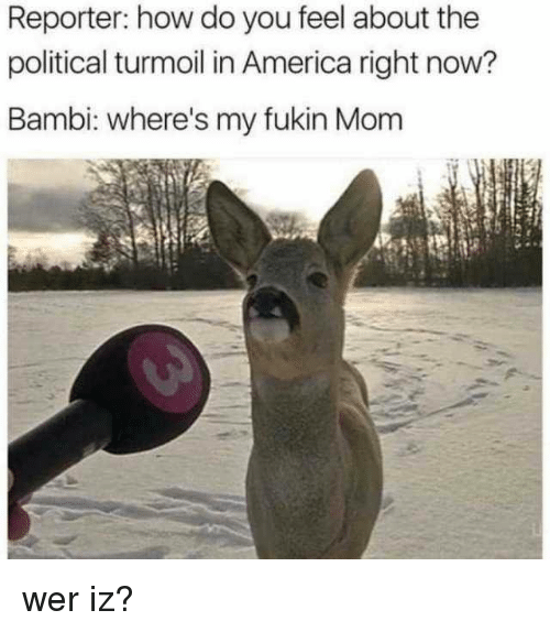 How Do You Feel: Reporter: how do you feel about the  political turmoil in America right now?  Bambi: where's my fukin Mom wer iz?