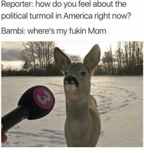 Bambi: Reporter: how do you feel about the  political turmoil in America right now?  Bambi: where's my fukin Mom
