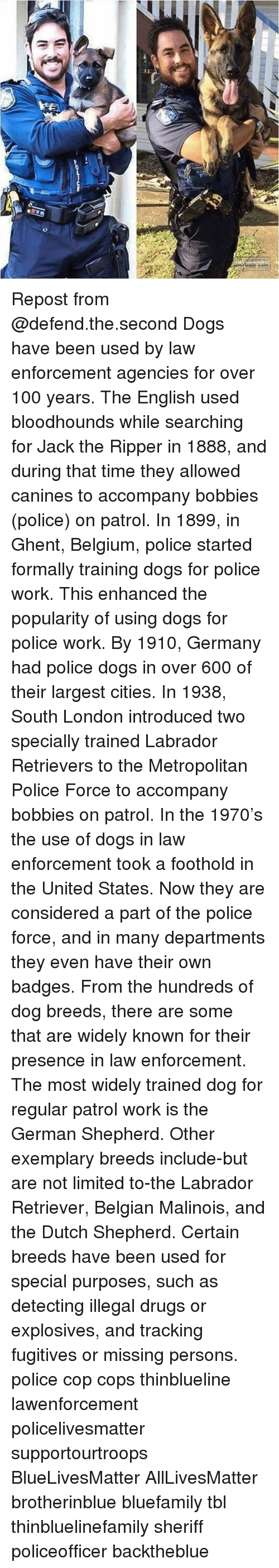 germane: Repost from @defend.the.second Dogs have been used by law enforcement agencies for over 100 years. The English used bloodhounds while searching for Jack the Ripper in 1888, and during that time they allowed canines to accompany bobbies (police) on patrol. In 1899, in Ghent, Belgium, police started formally training dogs for police work. This enhanced the popularity of using dogs for police work. By 1910, Germany had police dogs in over 600 of their largest cities. In 1938, South London introduced two specially trained Labrador Retrievers to the Metropolitan Police Force to accompany bobbies on patrol. In the 1970's the use of dogs in law enforcement took a foothold in the United States. Now they are considered a part of the police force, and in many departments they even have their own badges. From the hundreds of dog breeds, there are some that are widely known for their presence in law enforcement. The most widely trained dog for regular patrol work is the German Shepherd. Other exemplary breeds include-but are not limited to-the Labrador Retriever, Belgian Malinois, and the Dutch Shepherd. Certain breeds have been used for special purposes, such as detecting illegal drugs or explosives, and tracking fugitives or missing persons. police cop cops thinblueline lawenforcement policelivesmatter supportourtroops BlueLivesMatter AllLivesMatter brotherinblue bluefamily tbl thinbluelinefamily sheriff policeofficer backtheblue