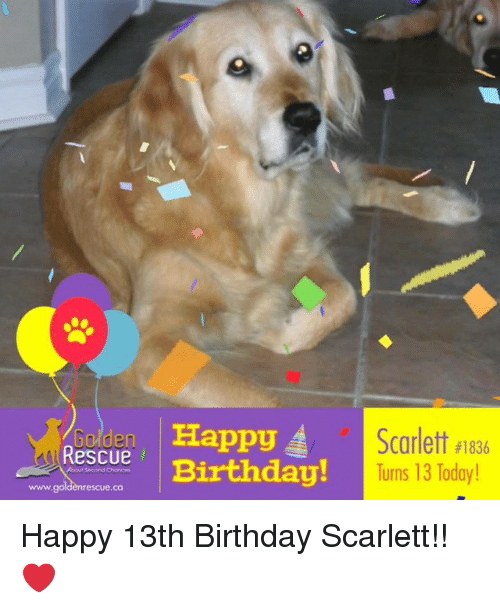 Birthday Memes And Happy Rescue A Scarlett 1836 Turns