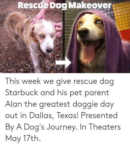 Dogs, Journey, and Memes: Rescue Dog Makeover This week we give rescue dog Starbuck and his pet parent Alan the greatest doggie day out in Dallas, Texas!  Presented By A Dog's Journey. In Theaters May 17th.