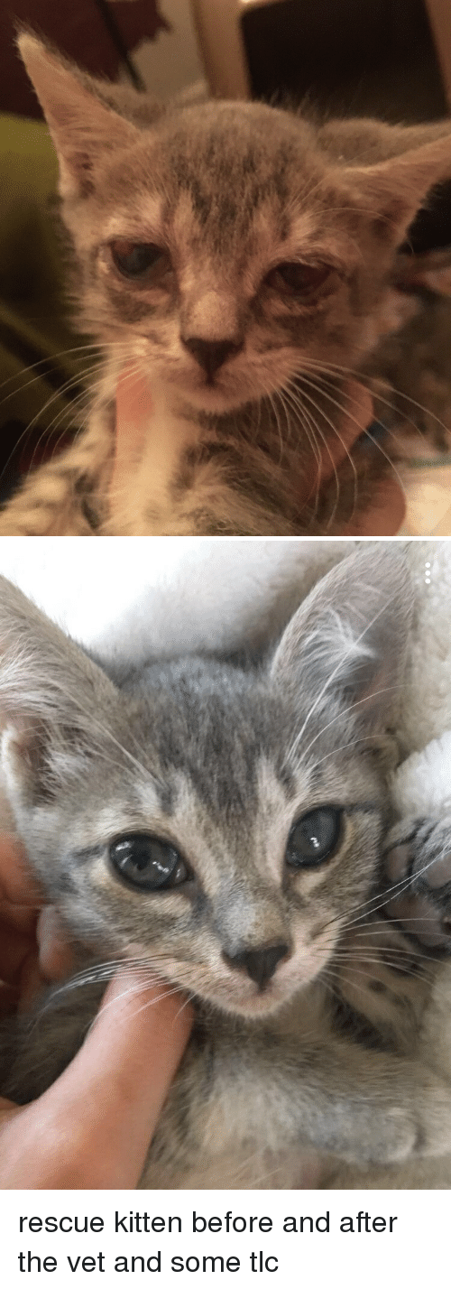 Sick, Tlc, and Kitten: rescue kitten before and after the vet and some tlc