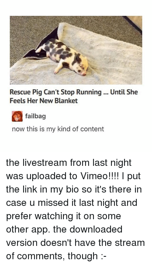 Pigly: Rescue Pig Can't Stop Running .. Until She  Feels Her New Blanket  failbag  now this is my kind of content the livestream from last night was uploaded to Vimeo!!!! I put the link in my bio so it's there in case u missed it last night and prefer watching it on some other app. the downloaded version doesn't have the stream of comments, though :-