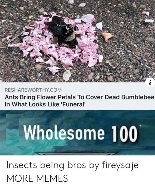 Ants: RESHAREWORTHY COM  Ants Bring Flower Petals To Cover Dead Bumblebee  In What Looks Like 'Funeral  Wholesome 100 Insects being bros by fireysaje MORE MEMES