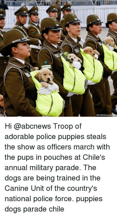 Dogs, Memes, and Police: REUTERS/Rodrigo Ga Hi @abcnews Troop of adorable police puppies steals the show as officers march with the pups in pouches at Chile's annual military parade. The dogs are being trained in the Canine Unit of the country's national police force. puppies dogs parade chile