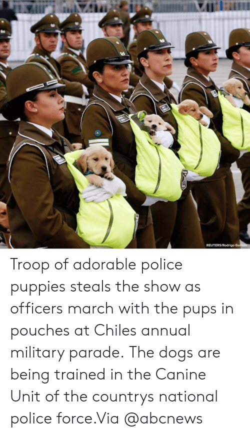 Rodrigo: REUTERS/Rodrigo Ga Troop of adorable police puppies steals the show as officers march with the pups in pouches at Chiles annual military parade.The dogs are being trained in the Canine Unit of the countrys national police force.Via @abcnews
