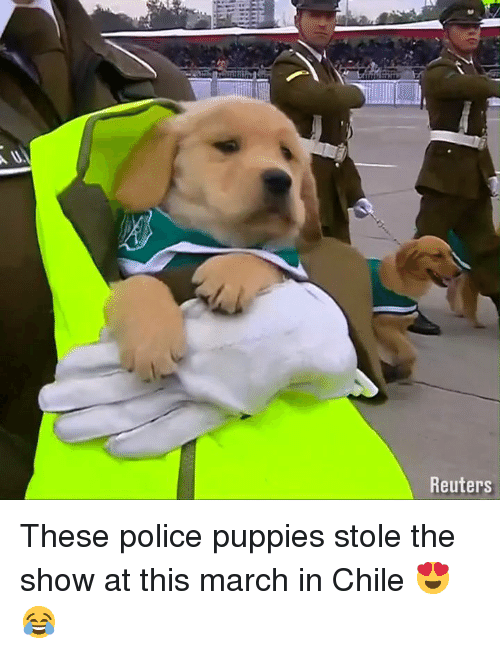 Dank, Police, and Puppies: Reuters These police puppies stole the show at this march in Chile 😍😂