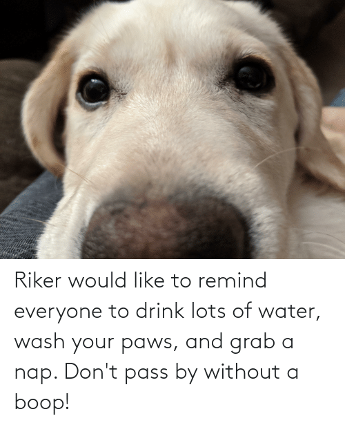Aww Memes: Riker would like to remind everyone to drink lots of water, wash your paws, and grab a nap. Don't pass by without a boop!