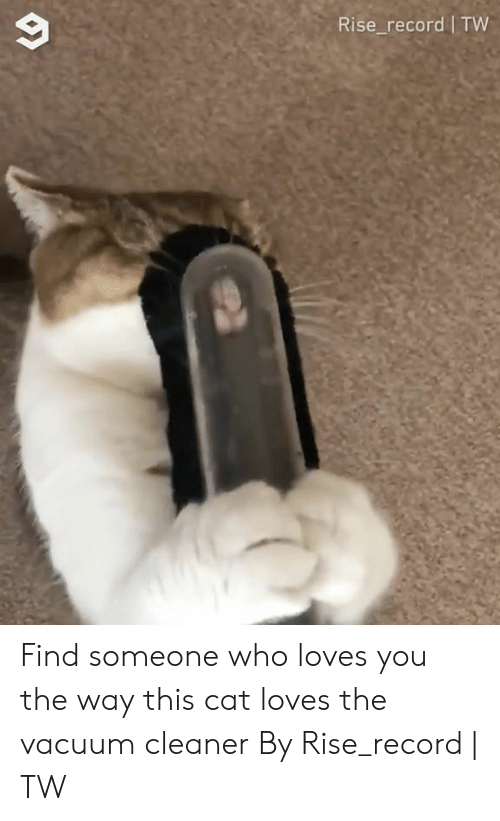 Dank, Record, and Vacuum: Rise_record TW Find someone who loves you the way this cat loves the vacuum cleaner  By Rise_record | TW