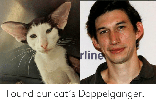 Doppelganger, Cat, and Our: rline Found our cat's Doppelganger.