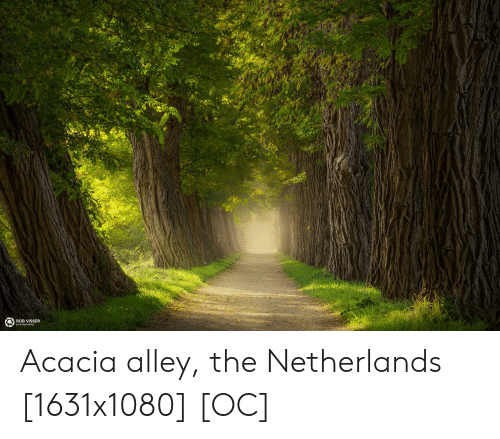 ROB VISsSER Acacia Alley the Netherlands 1631x1080 OC | Netherlands