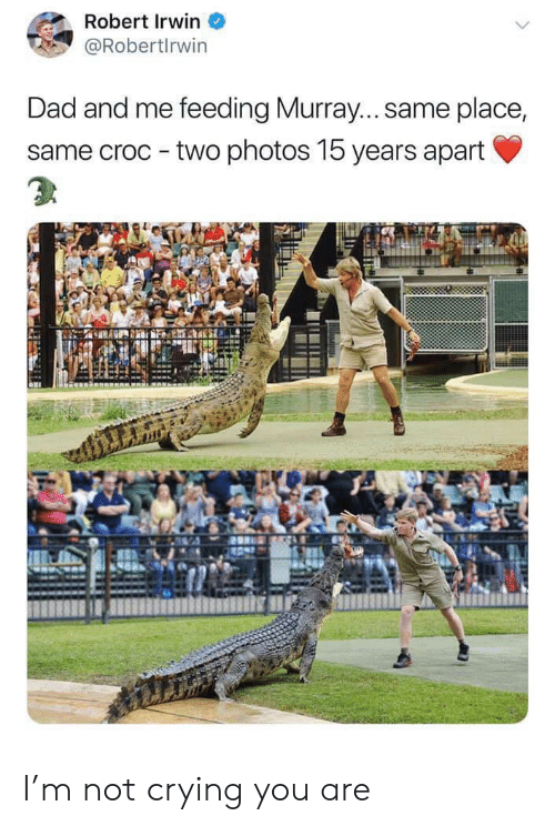 Crying, Dad, and Not Crying: Robert Irwin  @Robertlrwin  Dad and me feeding Murray... same place,  same croc two photos 15 years apart I'm not crying you are
