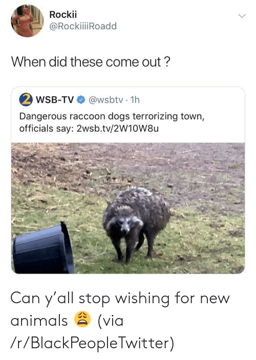 Rockii When Did These Come Out? 2 WSB-TV 1h Dangerous Raccoon Dogs