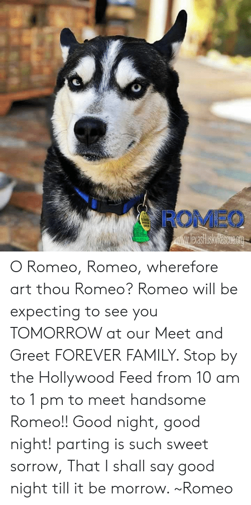 Family, Memes, and Forever: ROMEO O Romeo, Romeo, wherefore art thou Romeo?  Romeo will be expecting to see you TOMORROW at our Meet and Greet FOREVER FAMILY.  Stop by the Hollywood Feed from 10 am to 1 pm to meet handsome Romeo!!  Good night, good night! parting is such sweet sorrow,  That I shall say good night till it be morrow. ~Romeo